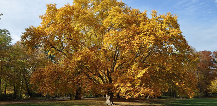 ames place trees