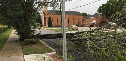 wind and storm tree damage